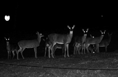 Deerheads