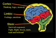 Gator brain